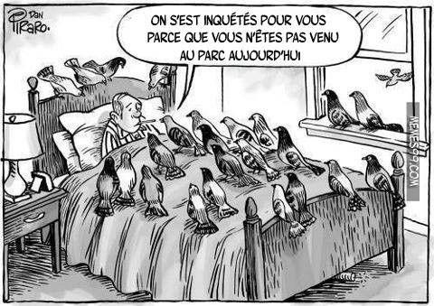 Histoire de pigeon... 2cf24279