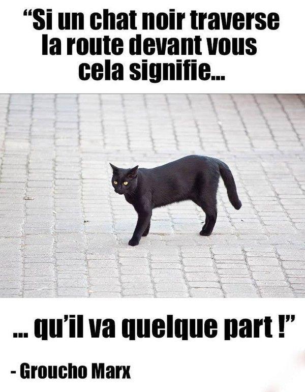 Si un chat noir croise ton chemin...