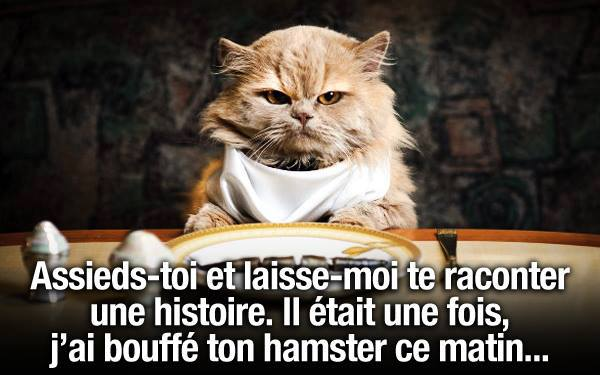 L 39 humour pas dr le du chat - Photo chat marrant ...